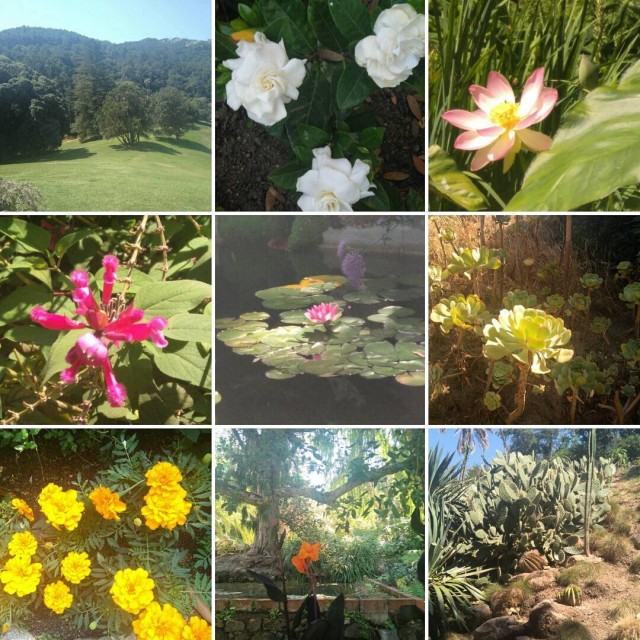 Esta maana paseo por Montserrate Francis Cook Lord Byron Jardnhellip